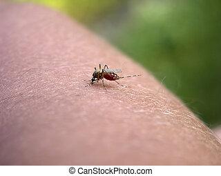moustique, mon, main, partie, 4