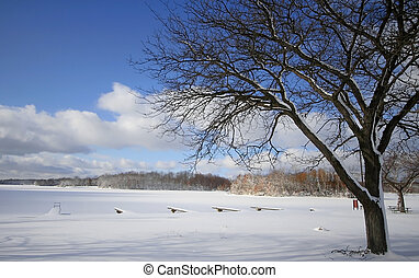 Winter Scene - Single tree with cloudy blue sky background