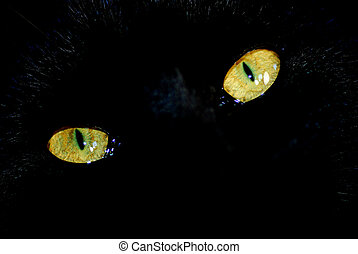 black cat - close up shot of a black cats eyes