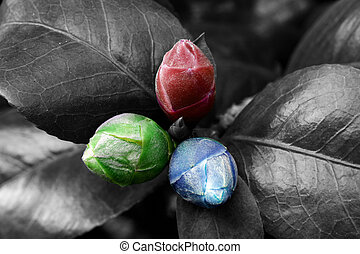 Red green and blue nature - Three young buds tinted in red...