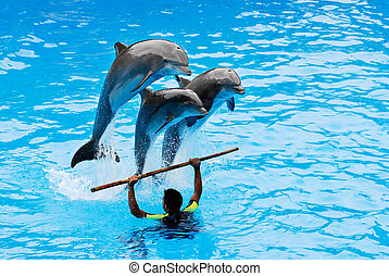 Jumping dolphins - The instructor with his three jumping...