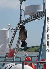 bird ahoy - a mascot on the rigging of a boat