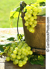 verde, uvas, folhas