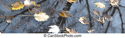 Bog And Leaves - Water leaves and trees reflection. Border...