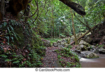 rainforest - beuatiful rainforest of the world heritage...