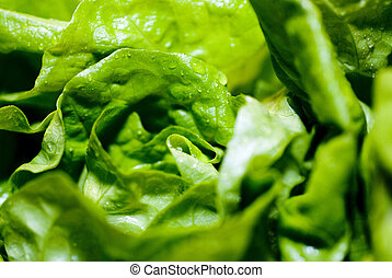 fresh lettuce - fresh green wet salat