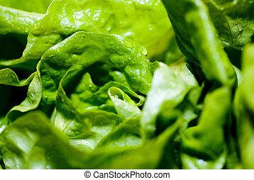 fresh lettuce - fresh green wet salat