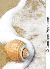 Seashell - Large seashell on a sandry beach, with seafoam...