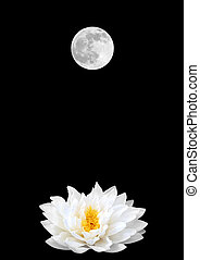 Feminine Symbols - Abstract of a white lotus water lily...