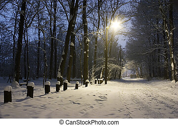 Winter evening - cold winter evening in city park