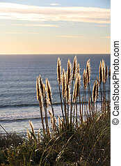 Golden grass along the beach at sunset