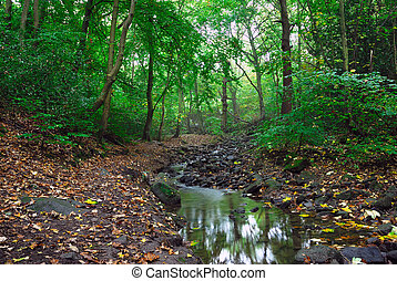 Stream in the woods - A woodlands scene with fallen leaves...