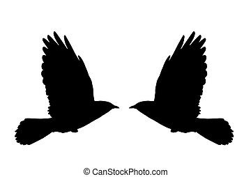 Flying Daw - Illustration from a silhouette of a flying daw