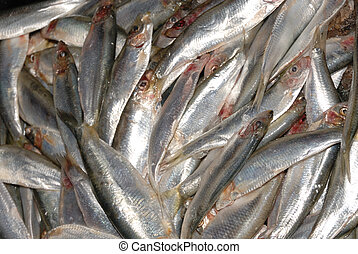 uncooked sprats at fishmonger
