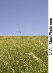 green land blue sky