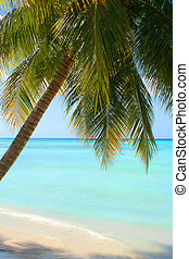 tropical Caribbean beach - palm tree shade on the Caribbean...
