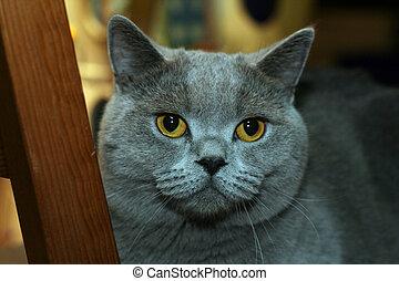 2, 英國人, 貓