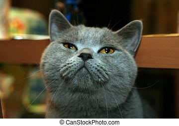 3, 英國人, 貓