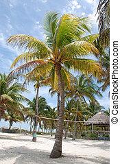 Coco palm scene