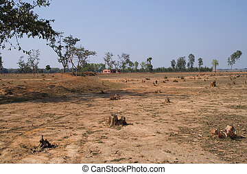 deforestation - trees from illegal cutting in a remote area...