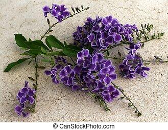 Geisha Girl flowers - A bunch of Geisha Girl flowers on a...