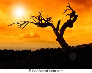 dead tree - a dead tree at sunset in provence