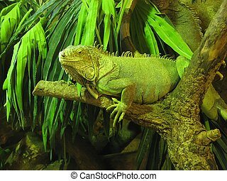 iguana - an image of an iguana on a branch