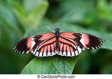 Postman Butterfly - Butterfly sitting on a leaf.