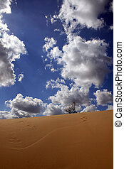 In dunes - Yellow sand, the blue sky, white clouds - here...
