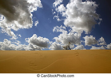 In dune - Yellow sand, the blue sky, white clouds - here it,...
