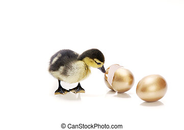 What\\\'s in there? - A duckling looking at a hatched egg....