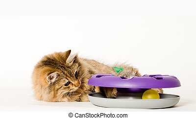 Young cat is playing with his toy - Young cat is trying to...
