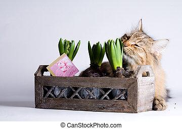 gato, cheirando, planta