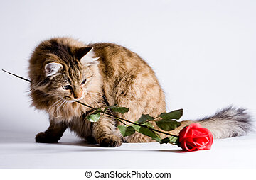 Young cat for Valentine - Young cat is bringing a rose for...