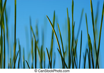 green grass straws - Close-up of fresh green straws against...