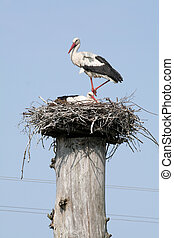 Storks - A couple of storks in their nest