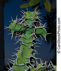 Cross shaped cactus - Close up of a cross shape green cactus...