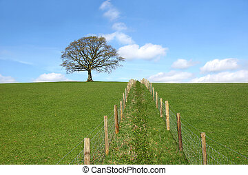 Divisions - Oak tree on a horizon in early spring with a...