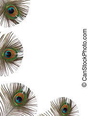 Peacock Feather Beauty - Iridescent eyes of four peacock...