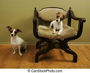 Two JRTs on a Roman Chair