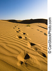 Footprints in the sand dunes - Thar desert, Rajasthan, India