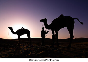 Camel silhouettes at sunrise