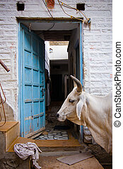 Indian sacred cow - Sacred cow in front of an indian house...