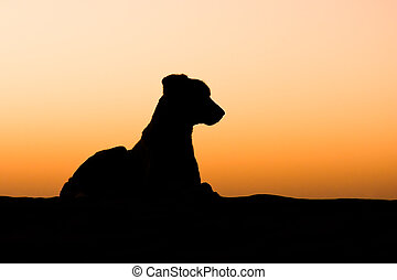 Dog silhouette - Silhouette of a desert dog lying on a sand...