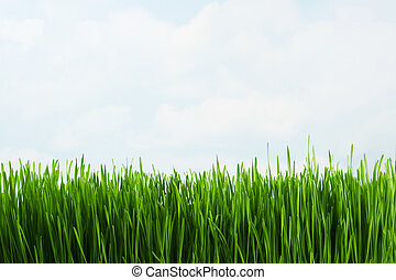 Grass against sky