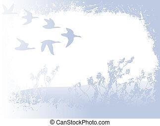 voler, Oiseaux