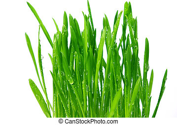 wheatgrass isolated on a white background