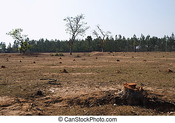 deforestation in india, west bengal