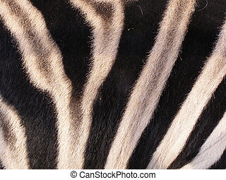 The skin of zebra - I photographed the zebra in the zoo in...
