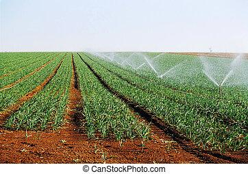 irrigação, tiros